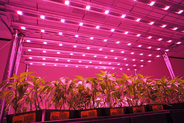 illumitex led grow lights