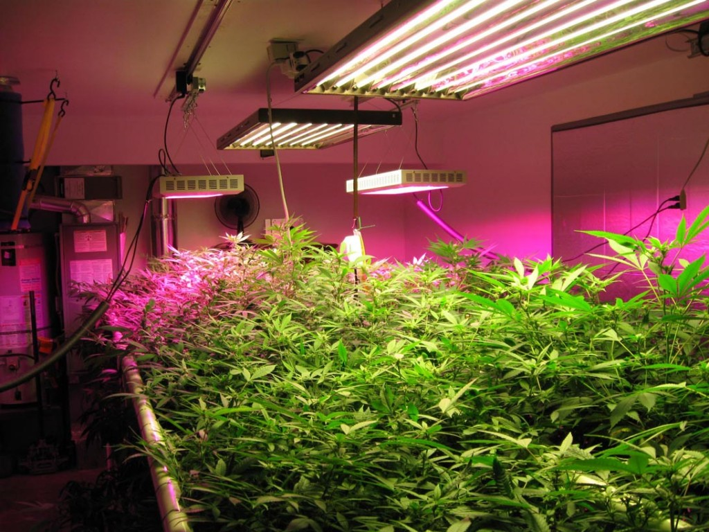 Best-Rated-LED-Grow-Lights-Reviews-Guide