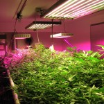 Reviews Archives - LED Grow Lights Judge
