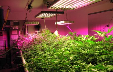 Best Rated LED Grow Lights Reviews Guide