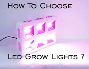 how-to-choose-led-grow-lights