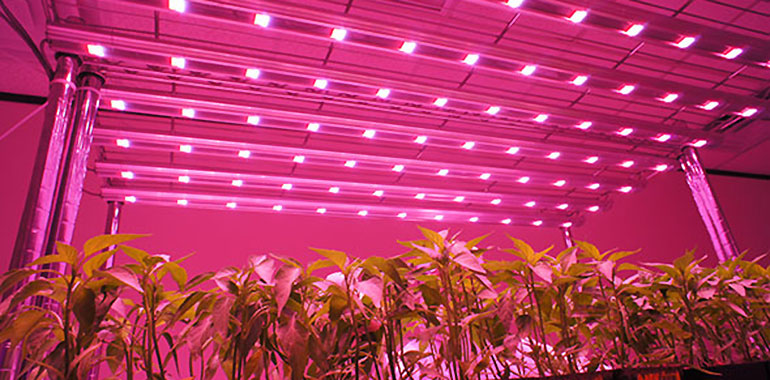 What to consider when buying high quality LED grow lights