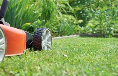 How Often Should You Mow Your Lawn 1