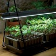 How-to-Grow-Houseplants-in-Artificial-Light.jpg