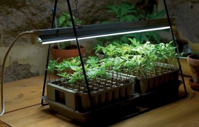 How to Grow Houseplants in Artificial Light