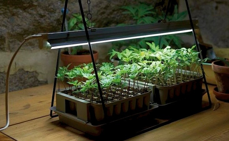 How to grow houseplants in artificial light led grow for What plants can i grow indoors