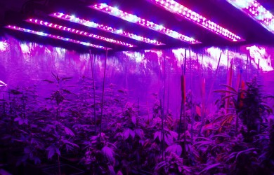 How to Control Thermal Management of LED Grow Lights