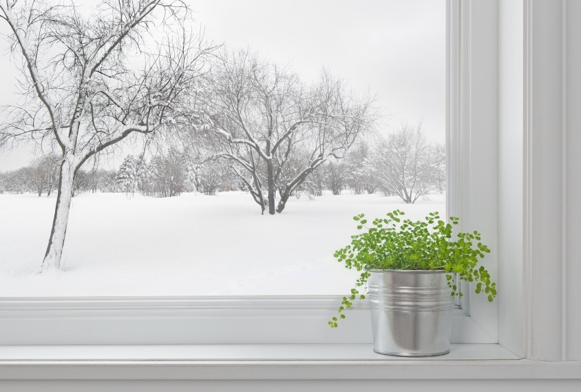 How to Grow Plants Indoors During Winter