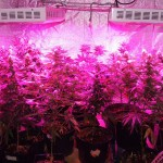 Things to Remember Before You Purchase LED Grow Lights