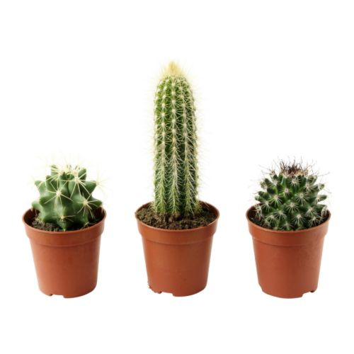What Are the Fastest Growing Indoor Plants