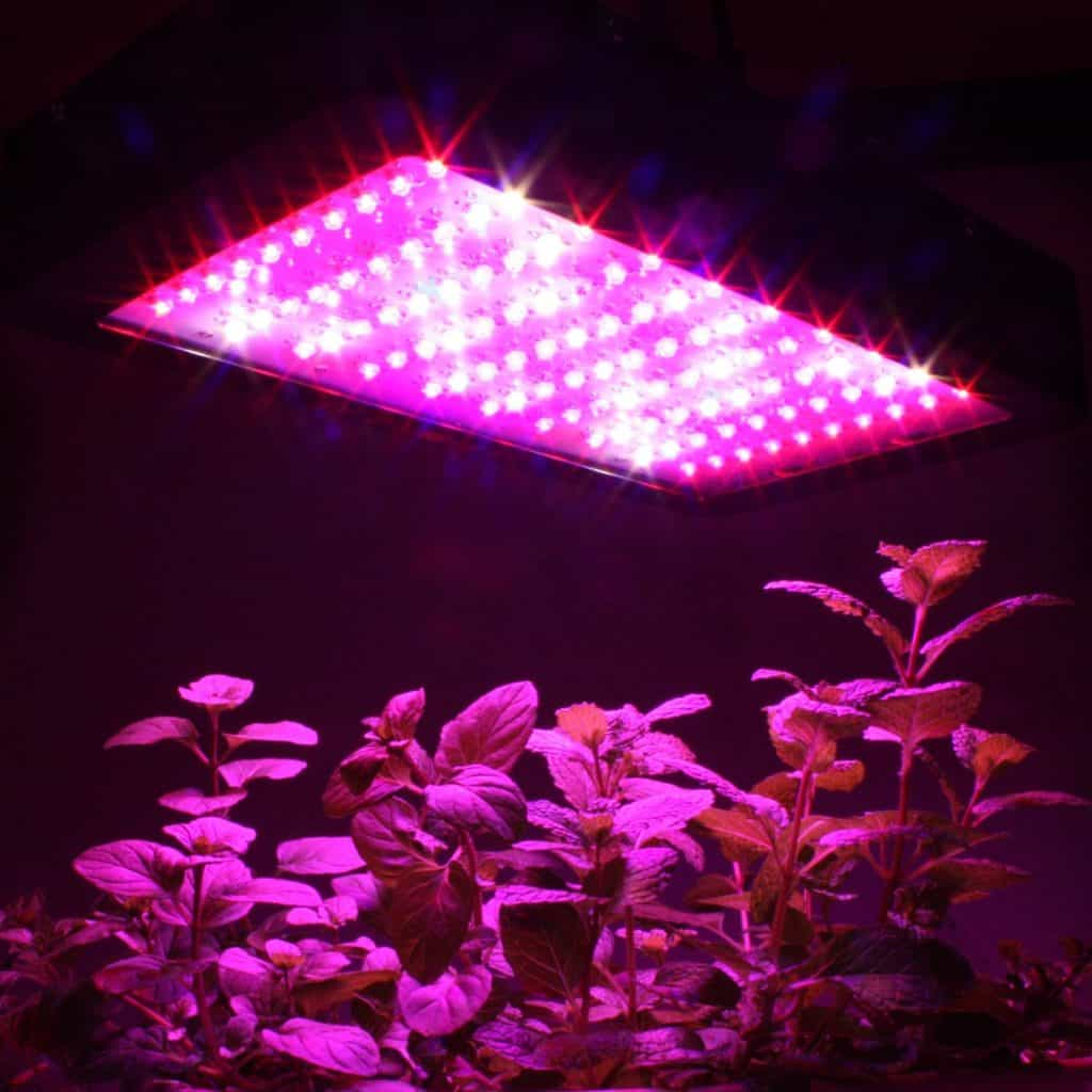 Apollo Horticulture: Affordable and Good Quality Grow Lights For Your Green